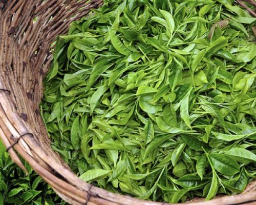 Tea Production Loan